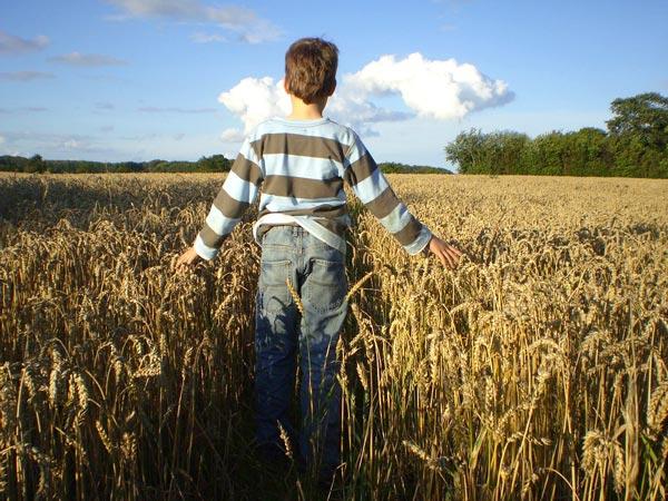 Producteur de blé
